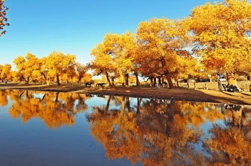 中国最美六大胡杨林,第一个就让人一眼难忘,上帝赐予最美的秋色