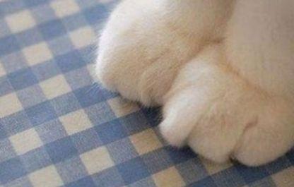 猫咪躲在角落做坏事,主人抬起它的小粉爪,在它脚底做了这个动作