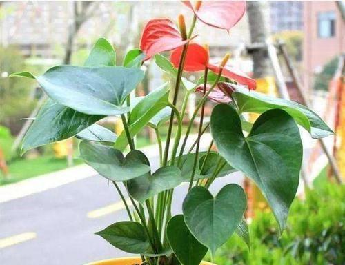 """随便@这""""3种花""""随便买,摆家里叶片绿、花色艳,很喜庆"""