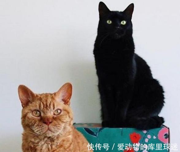 两只猫咪隔着玻璃和大叔互动,4年来从未断过,大叔一来跑去窗边