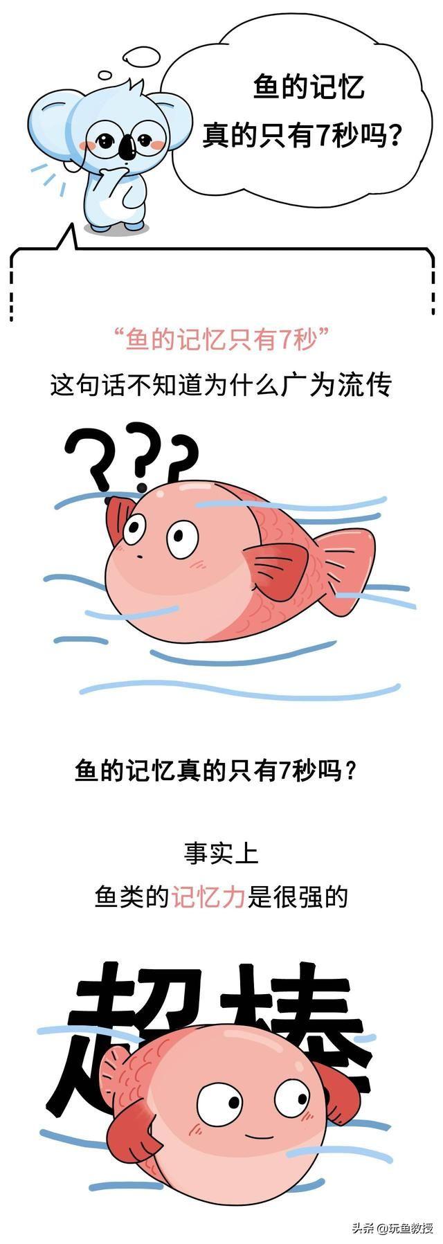 鱼为什么有记忆?未解之谜