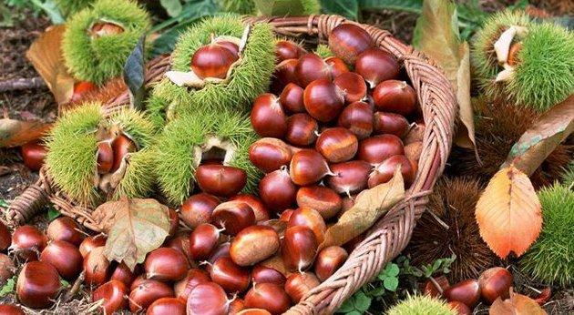 板栗最好搭配此物食用,养胃健脾、抗衰老!你爱吃板栗吗?