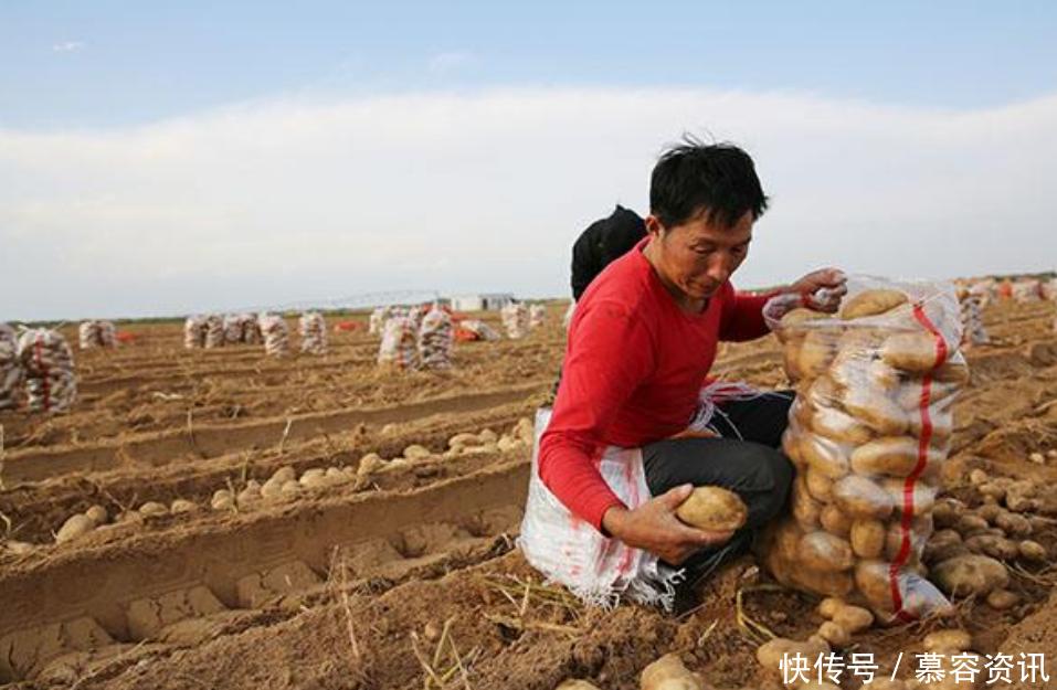 """全球第一个被""""治愈""""的沙漠 村民拿来种土豆, 一年收获上万斤"""