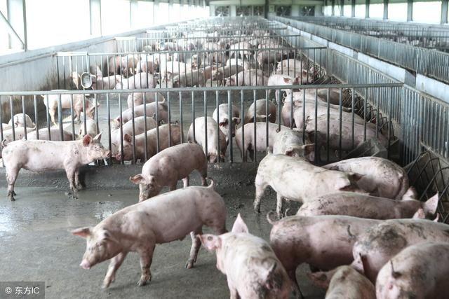 最赚钱的养殖业_最赚钱的养殖业是什么
