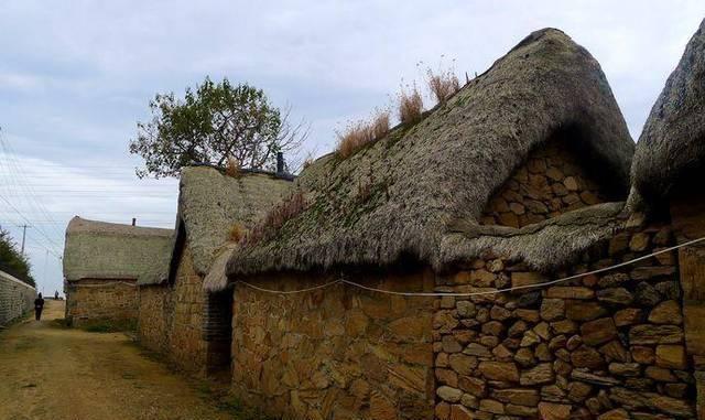 """[瓦神]农村瓦片上一种野草,老人称它为""""瓦神"""",价值很高可惜不多见了"""