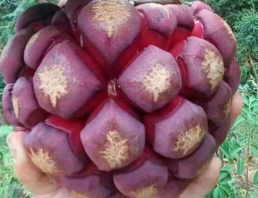 四种世界级罕见的水果,你见过哪种?吃过一种就是土豪,不夸张!(四)