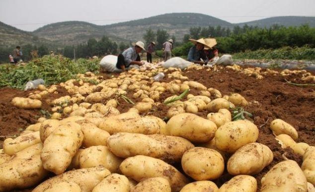 枣庄四大传统名优农产品,滕州占据两个