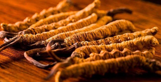 吃冬虫夏草的好处 看完这篇文章你就知道了!