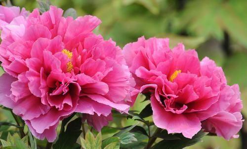 「值得」可以养护在家庭庭院的3个花卉,不养是你的损失,值得拥有的花