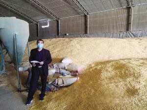 [农发行河北省分行营]多收粮,收好粮,今年更不一样