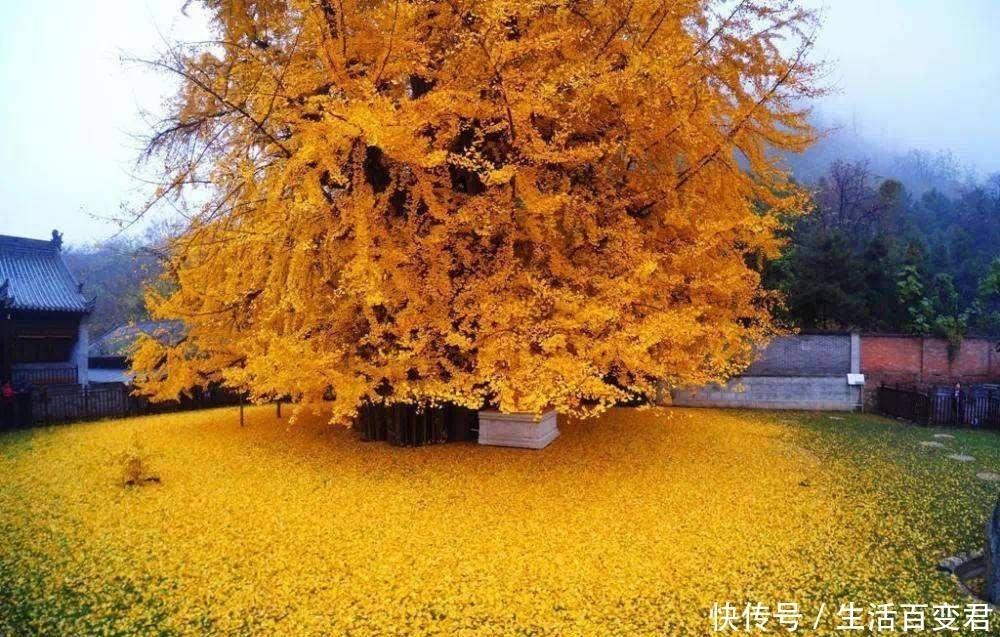 世界上最漂亮的六棵树,日本新西兰均有上榜,中国的最有感觉!