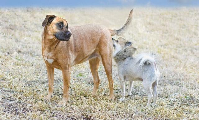 为什么狗狗会闻同类的屁股?它不会觉得羞耻吗?其实它在交朋友