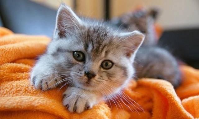 紧张时看看这14张超治愈的猫咪照片,让可爱的猫咪给你放松大