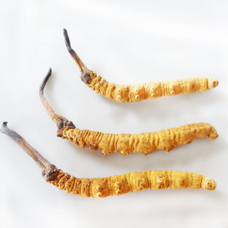 什么是冬虫夏草 正宗的冬虫夏草的产地在哪儿