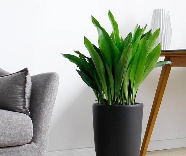 养什么品种的花及好看,不见阳光照样活的植物,给推荐?