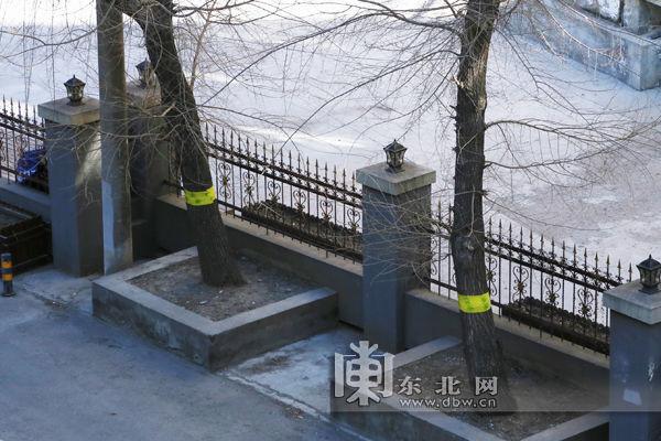 哈尔滨启动园林春整行动 黄胶带缠树防虫害