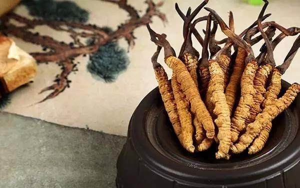 白血病患者能吃冬虫草吗?藏民解说冬虫夏草对白血病的辅助功效