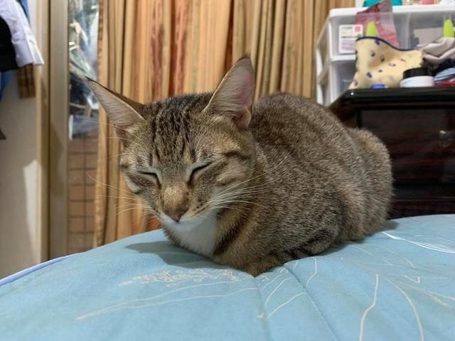 医生称猫咪让孩子过敏,建议主人送走猫咪,奶奶霸气回应:换医院