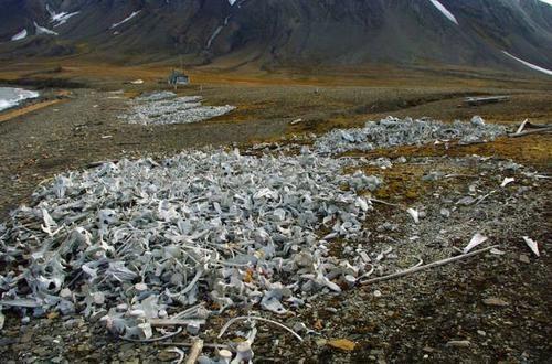 """斯瓦尔巴海滩上堆满了""""白色垃圾"""",当地政府明令禁止搬运"""