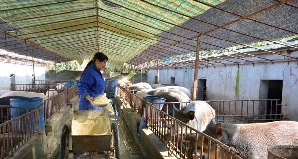 好消息! 农村三种养殖场严格核对,农民担心的污染问题有望解决